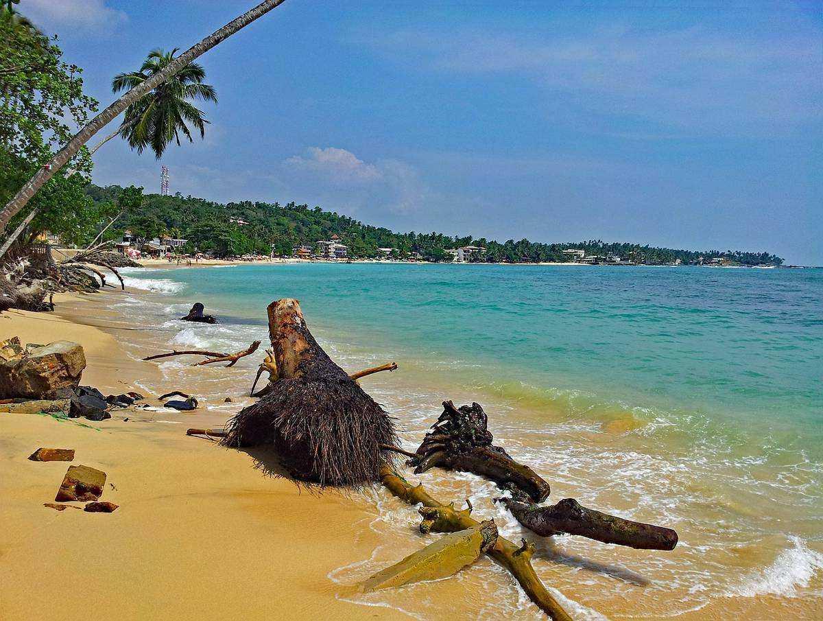 Отдых на острове шри-ланка: некритическая оценка • страны мира, города и туризм